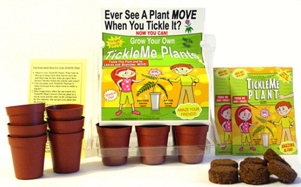 TickleMe Plant Greenhouse garden kit with science activity card to (Grow the only House Plant that closes its leaves and lowers it branches when you Tickle It!) Great Unique Birthday Gift Idea!