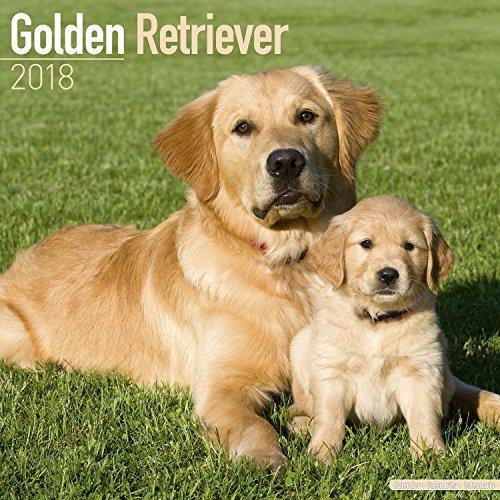 Golden Retriever Calendar 2018 - Dog Breed Calendar - Premium Wall Calendar 2017-2018 (Wall Retriever)