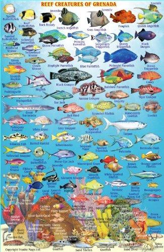 grenada dive map  u0026 reef creatures guide franko maps laminated fish card map  u2013 june 14  2013