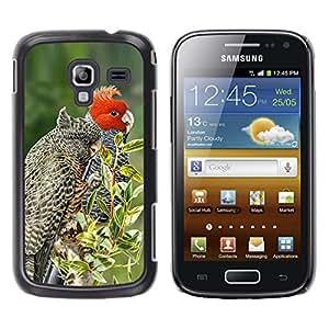 Las plumas pájaro rojo árboles Naturaleza Primavera- Metal de aluminio y de plástico duro Caja del teléfono - Negro - Samsung Galaxy Ace 2