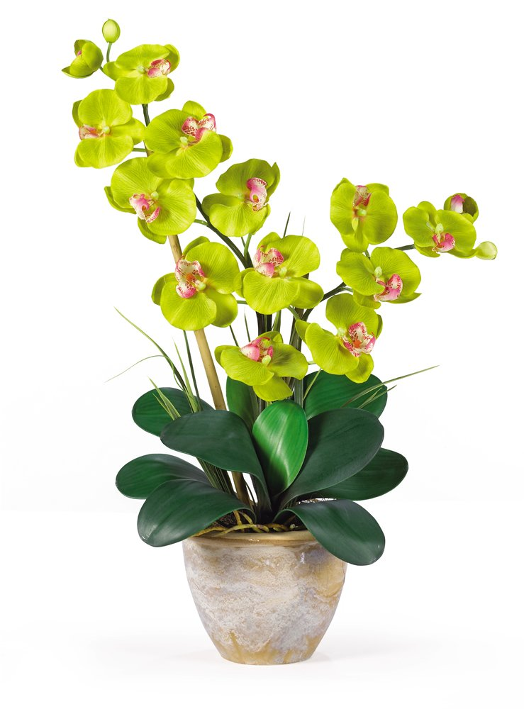 Nearly Natural 1026-GR Double Phalaenopsis Silk Orchid Flower Arrangement, Green
