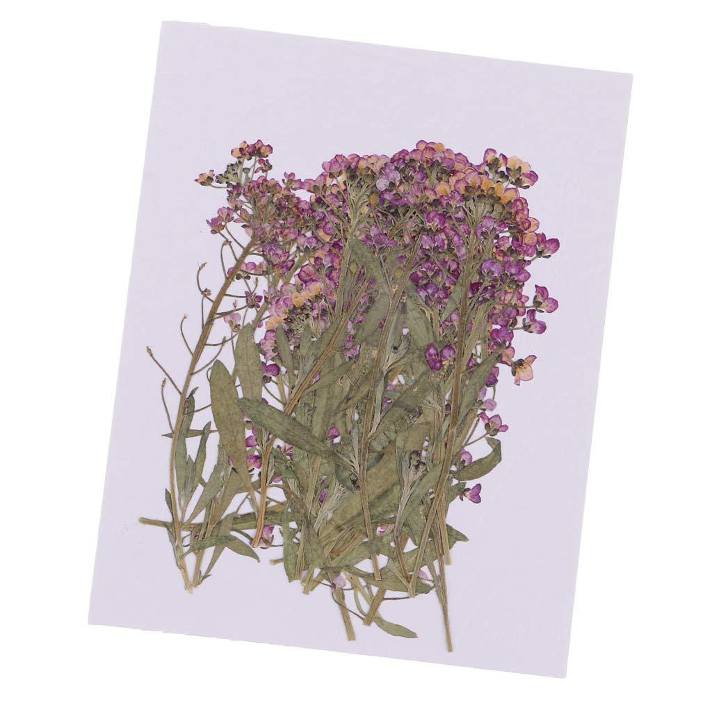 Prettyia 20ピース プレス加工 アリスム 本物の乾燥花 ジュエリー DIY ネックレス ペンダント チャーム 樹脂 キャスティング DIY オーナメント 4-8cm B07H52NGX5