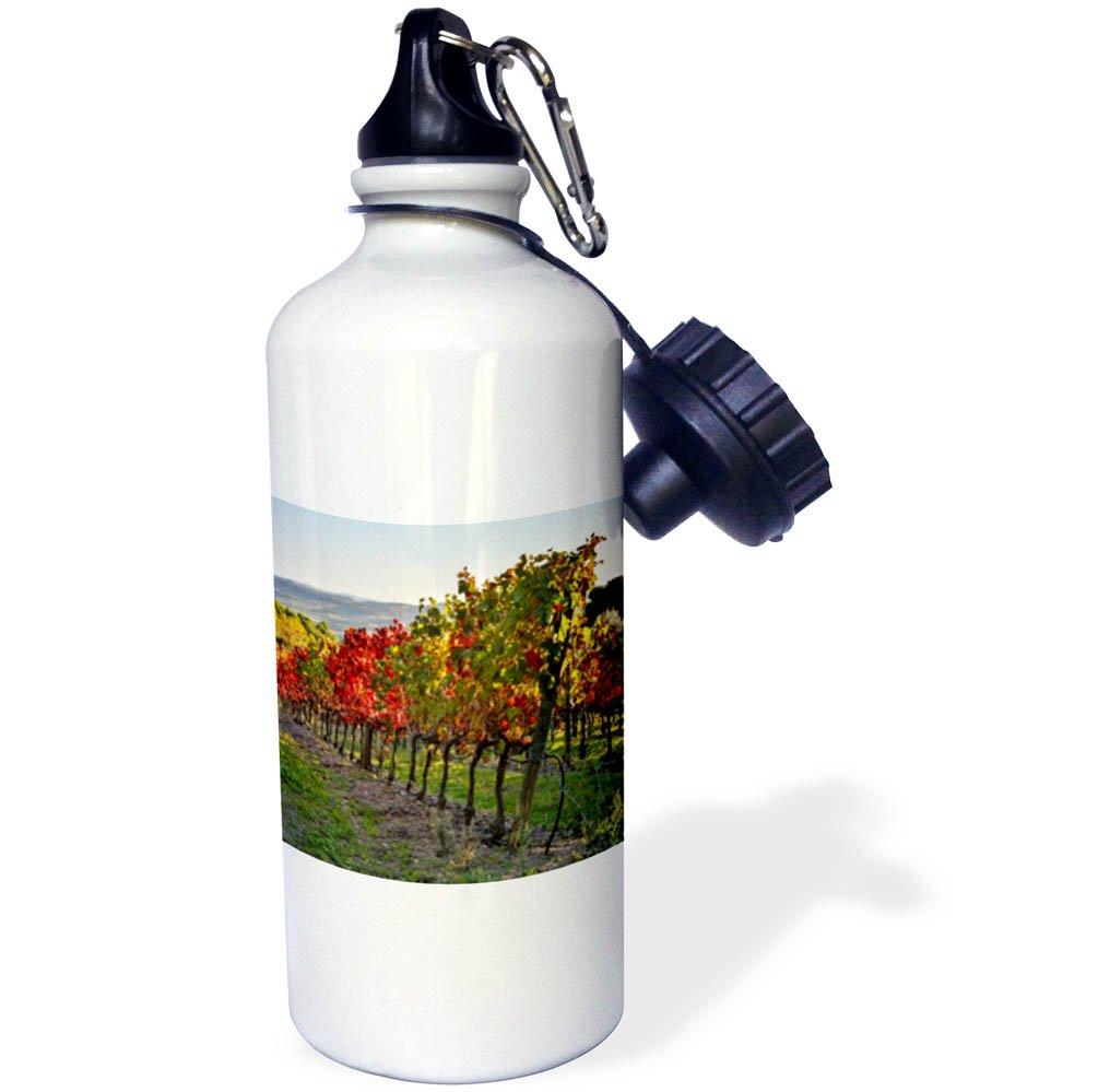 3dRose Danita Delimont - Vineyards - Italy, Montalcino, Vineyard in autumn. - 21 oz Sports Water Bottle (wb_277606_1) by 3dRose