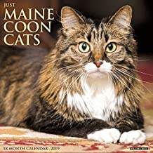 Just Maine Coon Cats 2019 Wall Calendar