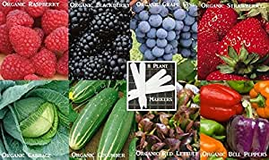 Vegetable Seeds & Fruit Seeds Combo Pack (Organic) 980+ Seeds 646263362983 Self Fertile + 8 Free Plant Markers Cucumber Lettuce Cabbage Bell Pepper Blackberry Raspberry Grape Strawberry