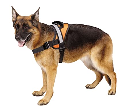 Amazon.com : Big Dog Soft Reflective No Pull Orange Harness Size L