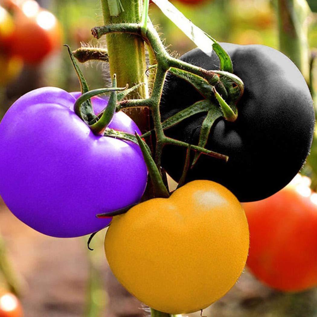 Keptei Samenhaus 100 St/ück Regenbogen Tomatensamen Bio Tomaten Samen fruit vegetable Heim Garten Dekor