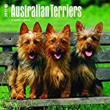Australian Terriers 2017 Square (English, French and Spanish Edition)