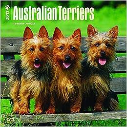 Australian Terriers 2017 Square Wall Calendar