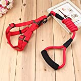 NEW Mountain Climbing Rope Dog Leash - Climbing Rope Dog Leash with Padded Handle for Medium and Large Dogs.For the Perfect Amount of Control, Safety and Freedom for both You and Your Pup! (Red)