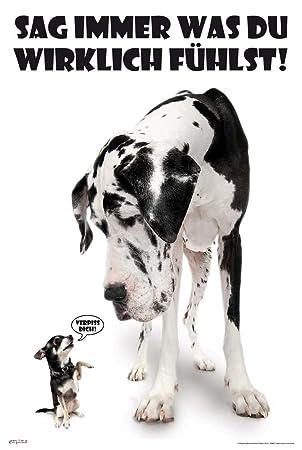 2a45b8808cac3 Amazon.de: empireposter - Hunde - Sag immer was du denkst - Größe ...
