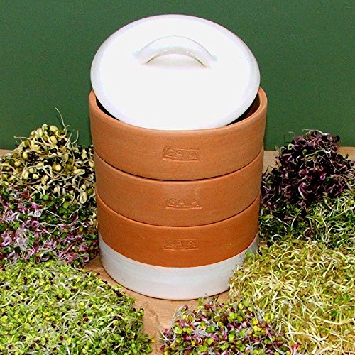 Clay GAIA Sprouter - Ivory White - Triplet 14cm dia /Terra Cotta Clay Sprouter/ Nutritious Seed Sprouter / Germinator with Sprouting Guide