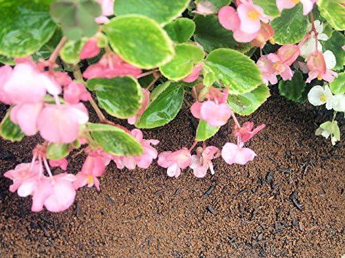 [イワモト]贅沢な赤玉土の菜園・花壇の土 15L 培養土