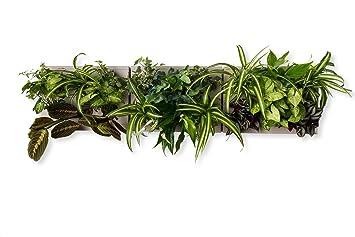 TRIO SMART de Ortisgreen, Trois Tableaux Végétaux Mural, Pot pour Plantes  Mural a99f4fc2dd4