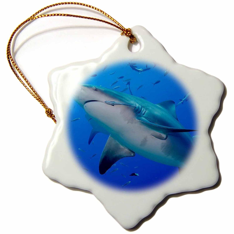 - 3 inch Snowflake Porcelain Ornament Fiji ORN/_278095/_1 3dRose Danita Delimont Close up of Bull Sharks Sharks