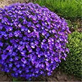 Vastravel Rock Cress Aubrieta Cultorum Blue Purple Flower 400 Seeds