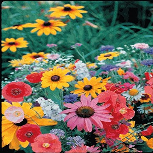 Northeast Wildflower Seed Mix - 1 Lb