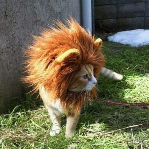 Löwenmähne für Katzen Miaustore.com