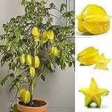 Wintefei 50Pcs Thai Star Fruit Seeds Juicy Carambola Exotic Tree Seed High Germination