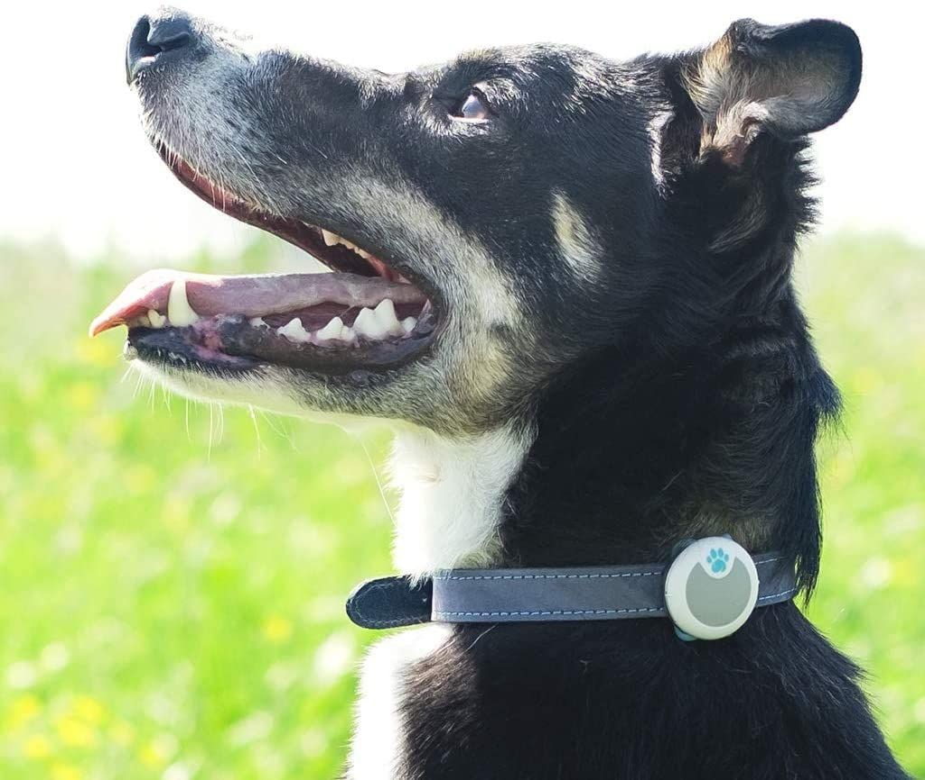 Amazon Com Sure Petcare Animo Dog Behavior Monitor And Activity Tracker Pet Supplies