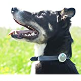 Sure Petcare Animo - Dog Behavior Monitor and Activity Tracker