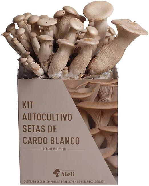 SETAS MELI   Kit Autocultivo Setas Ecologicas de Cardo Blanco   Para cultivar en casa   Crece en 10 das   Kit perfecto para regalar   Hecho en España   kit ECOLOGICO Y RECICLABLEi: Amazon.es: Jardín