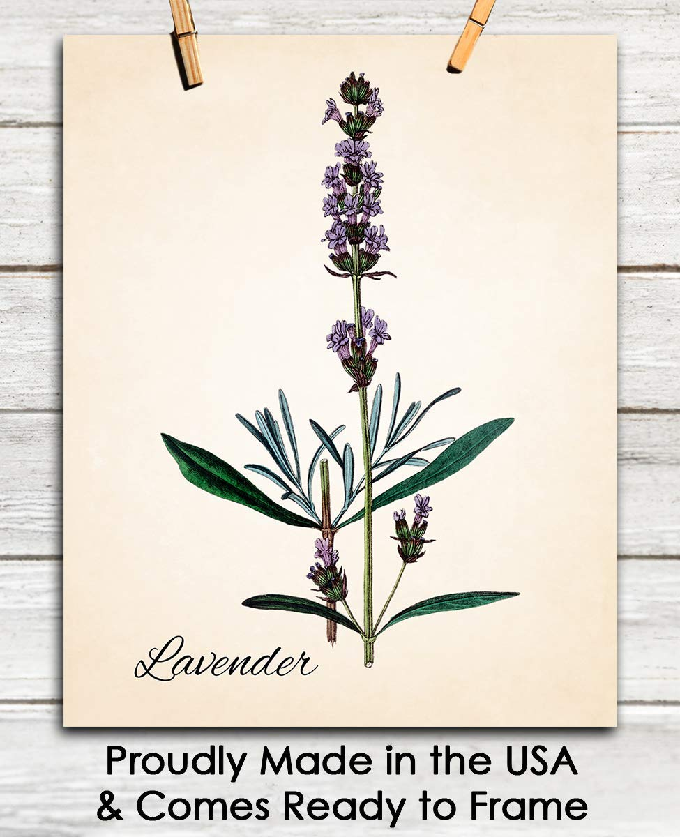 Amazon Com Vintage Lavender Wall Art Print 8x10 Unframed Picture For Home Office Dorm Bedroom Decor Great Gift Idea Under 15 Handmade