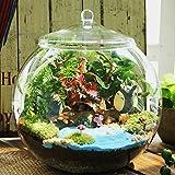 Glass Home Gardens Best Deals - DIY Moss Micro Landscape Eco Glass Bottle Succulent Plants Flower Pot Home Garden Decoration
