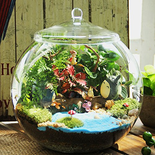 Bluelover DIY Moss Micro Landscape Eco Glass Bottle Succulent Plants Flower Pot Home Garden Decoration