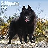 Schipperke Calendar - Dog Breed Calendars - 2017 - 2018 wall Calendars - 16 Month by Avonside