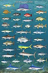 Picture Peddler Laminated Salt Water Game Fish of North America Educational Reference Chart Print Poster 24x36