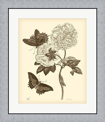 Amazon.com: Nature Study in Sepia IV by Maria Sibylla Merian Framed ...
