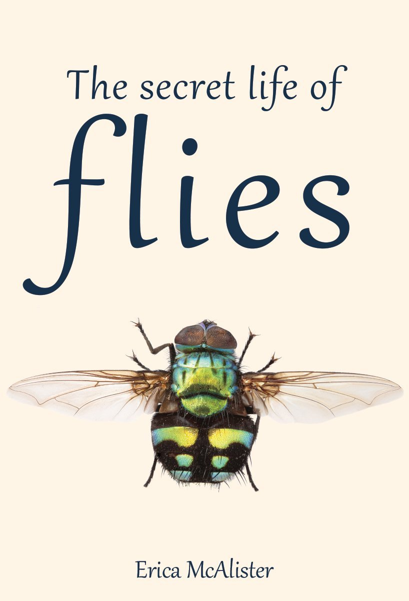 the secret life of flies erica mcalister 9781770858091 amazon