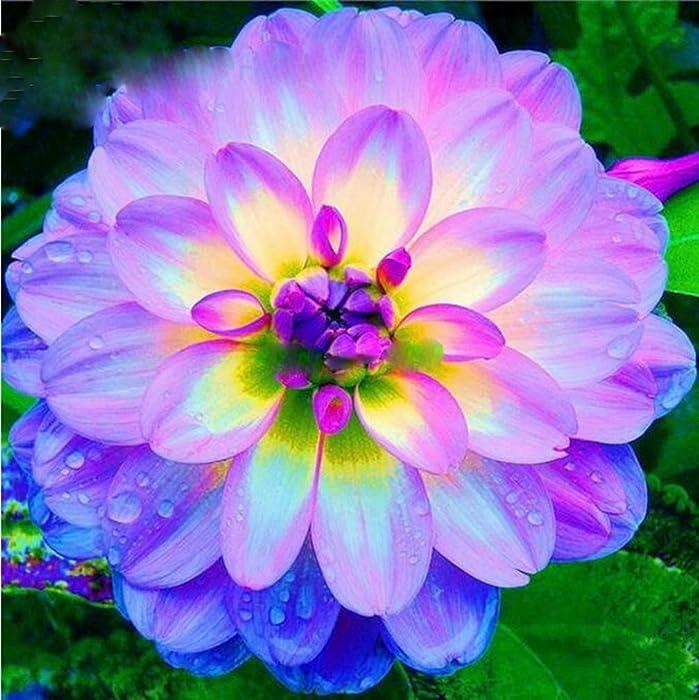 Top 7 Garden Perennials