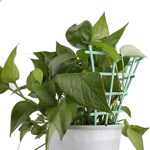 YIREAUD 6 Piezas de Soporte de Tallo de Plantas para Interior ...