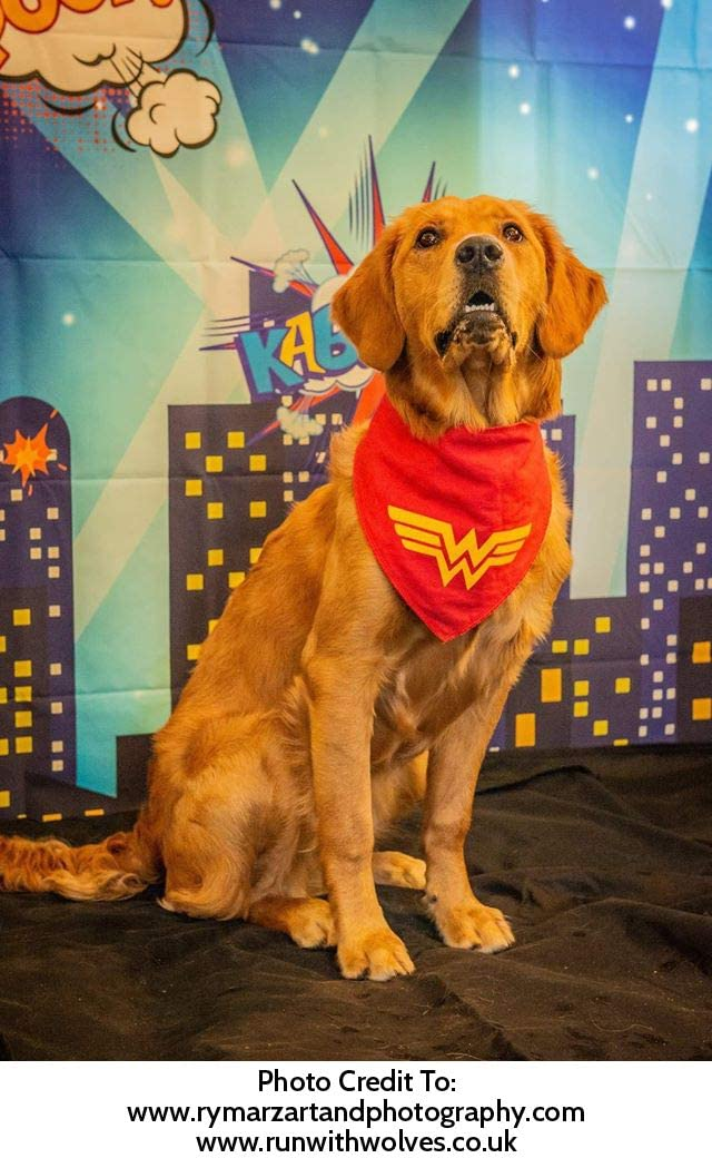 f/ür unbesiegbare Hunde Spoilt Rotten Pets Halstuch Thor Ragnarok Avengers Endgame S