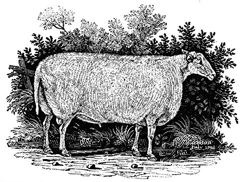 Posterazzi Poster Print Collection Sheep Teeswater Improved Breed. Wood Engraving, 1798, by Thomas Bewick, (18 x 24), - Breeds Poster Sheep