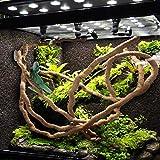 PIVBY Bearded Dragon Hammock Jungle Climber Vines
