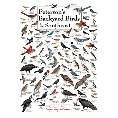 Earth Sky & Water Poster - Peterson's Backyard Birds of the Southeast