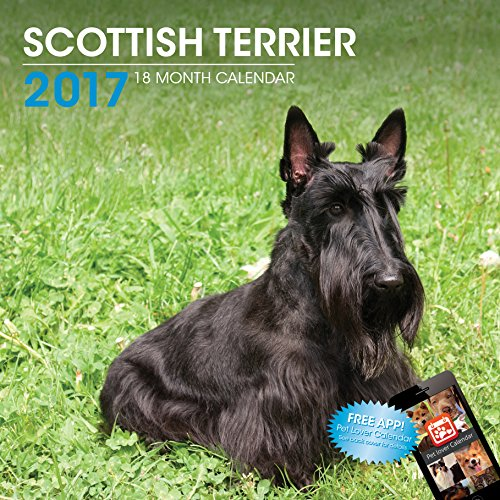LittleGifts Scottish Terrier 2017 Calendar (3064)