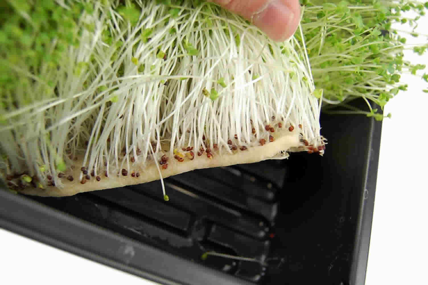 Micro-Mats Hydroponic Grow Pads - For Organic Production - 500 Pack - Plant & Seed Germination: Wheatgrass, Microgreens, More - For 20'' x 10'' Greenhouse Trays