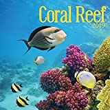 Turner Photo Coral Reef 2019 Wall Calendar (199989400160 Office Wall Calendar (19998940016)