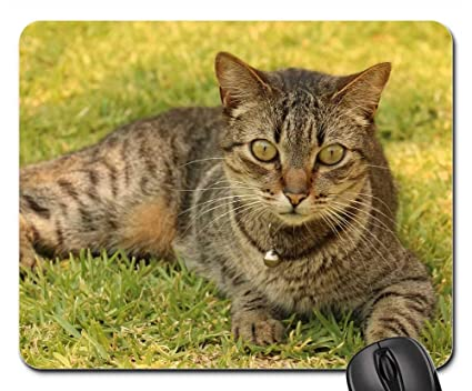 Amazon.com: Mouse Pads - Gata Cat Feline Look Kitten Tuned ...