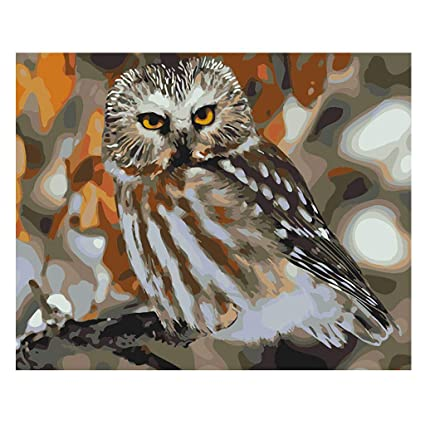 Amazon Com Lukalook Owl Diy Digital Oil Painting Paint By Number