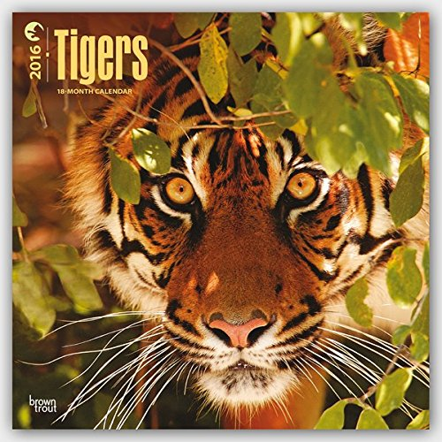 [Free] Tigers - 2016 18 Month Calendar 12 x 12in R.A.R