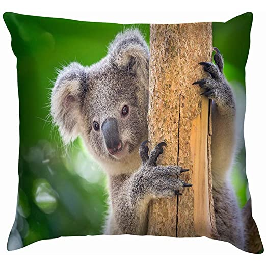 Duang Funda de cojín Koala Bear Zoo Animales Parques de Vida ...