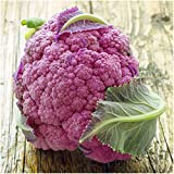 "Package of 100 Seeds, Cauliflower ""Purple of Sicily"" (Brassica oleracea) Seeds By Seed Needs"