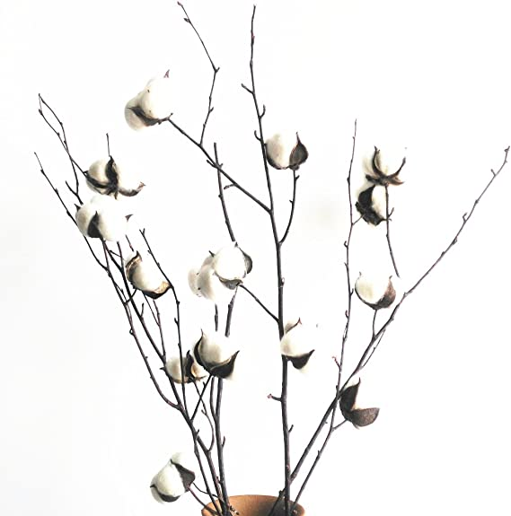 Bola de algodón natural blanco con ramas de ramas de abedul y ...