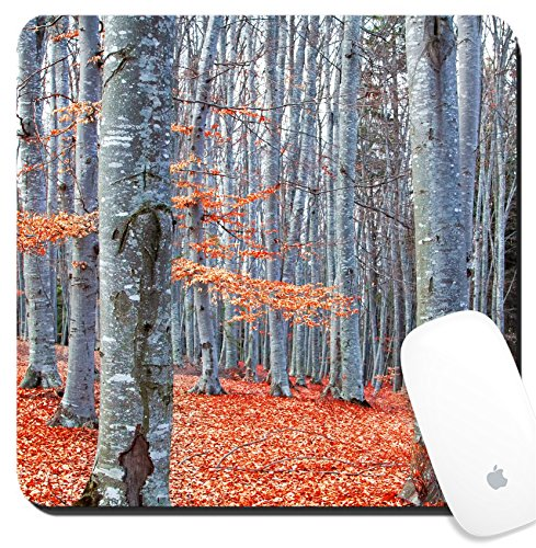 Luxlady Suqare Mousepad 8x8 Inch Mouse Pads/Mat design IMAGE ID 26368508 Beautiful Autumnal Forest with Beech Trees Fagus Sylvatica and Dried (Beech Tree Leaves)