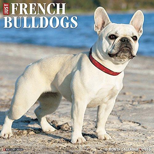 2016 Just French Bulldogs Wall Calendar